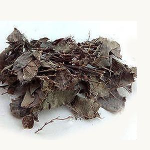 Dabra-Shankaraja   Buy Ayurvedic Herbs & Products Online   Certified by Ayurveda Doctors   100% genuine   Trustherb Ayurvedic products marketplace