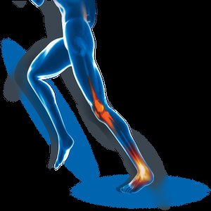 Bone/Joint wellness