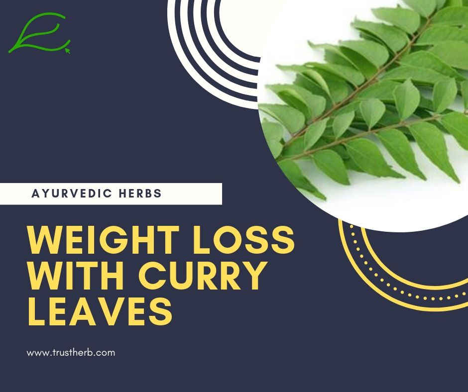 weight loss with curry leaves | Buy Ayurvedic Herbs & Products Online | Certified by Ayurveda Doctors | 100% genuine | Trustherb Ayurvedic products marketplace